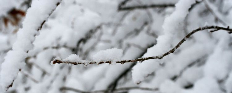 Snowybranches2